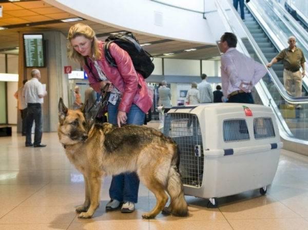 Авиаперевозка собаки за границы государства