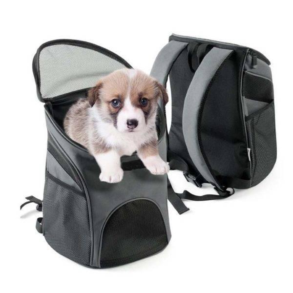 маленькая собачка в перевозке