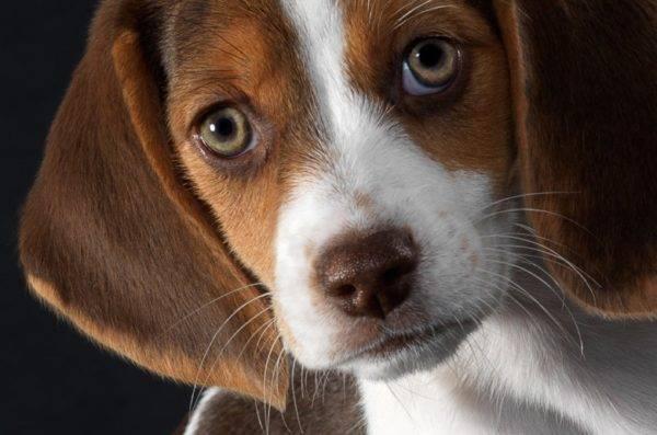 красивая собачка