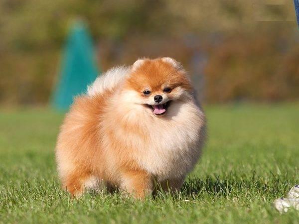 собаки самые милые фото