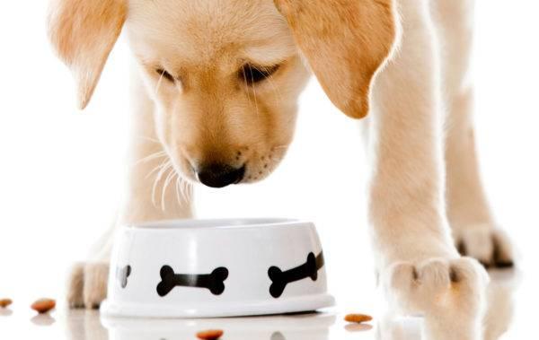 собачка ест