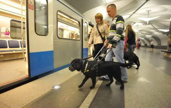 Собаки-поводыри в метро
