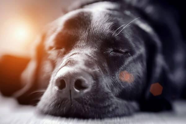 Гепатит у собак читайте статью
