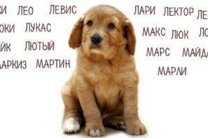 Имя для щенка-мальчика