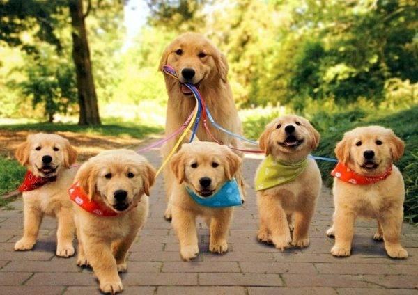клички для собачек