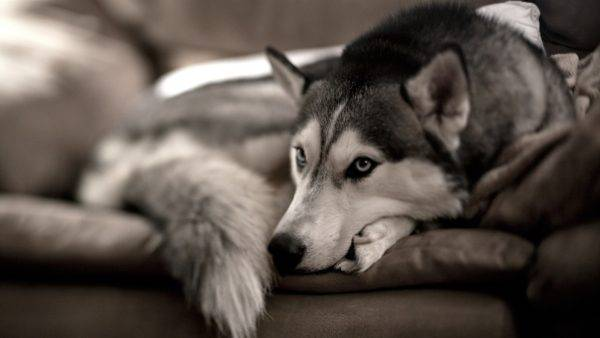 Язва роговицы у собак читайте статью