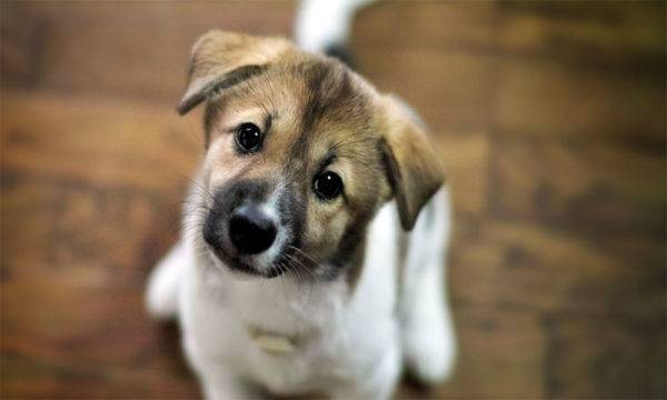 милая собачка