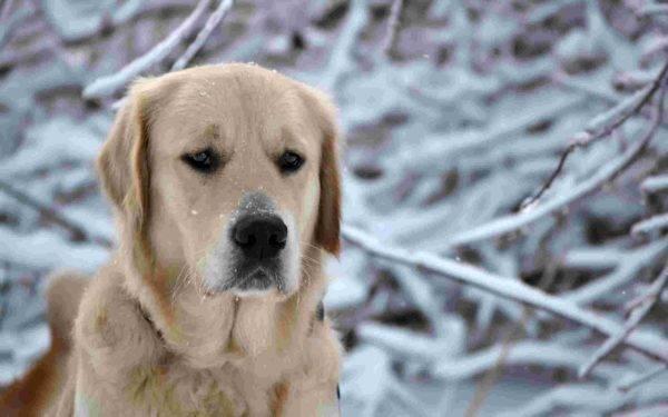 Инфаркт у собак читайте статью
