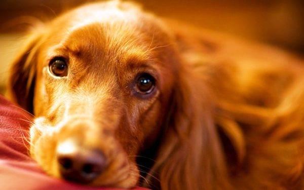 Гастрит у собак читайте статью