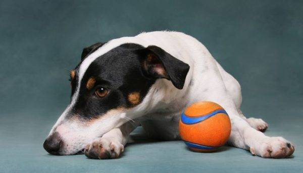 Артрит у собак читайте статью