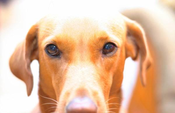 Острый колит у собак лечение thumbnail
