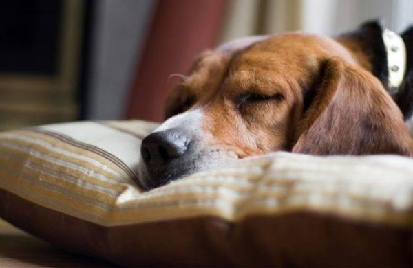 Парвовирусный энтерит у собак читайте статью