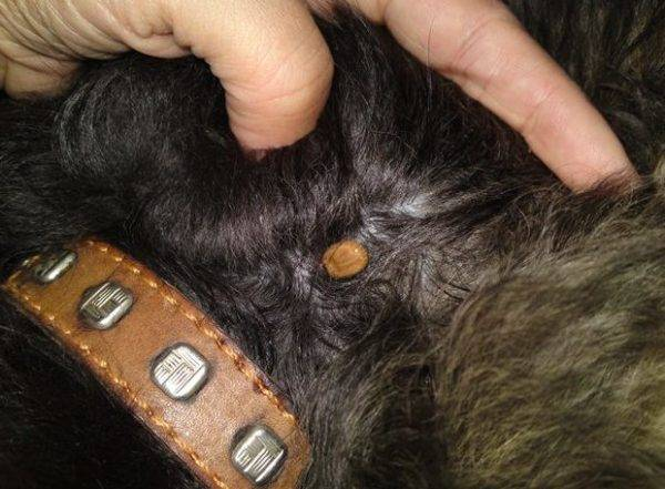 Royal Canin Gastro Intestinal Лечебные консервы для собак