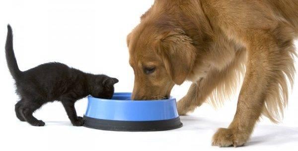 кот и собака кушают