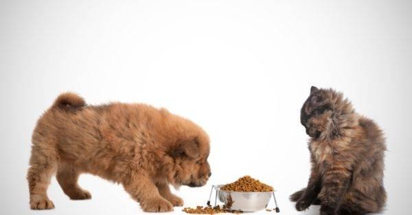 Можно ли давать собаке кошачий корм читайте статью