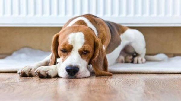Почечная недостаточность у собак читайте статью