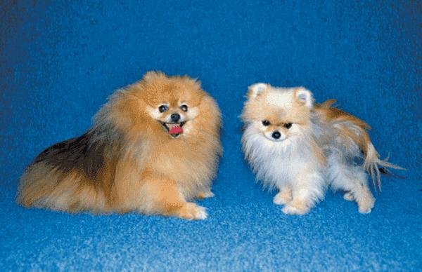 Алопеция (облысение) у собак читайте статью