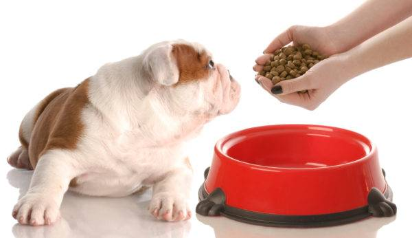 Собака перестала есть
