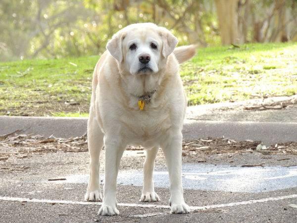 Ожирение у собак читайте статью