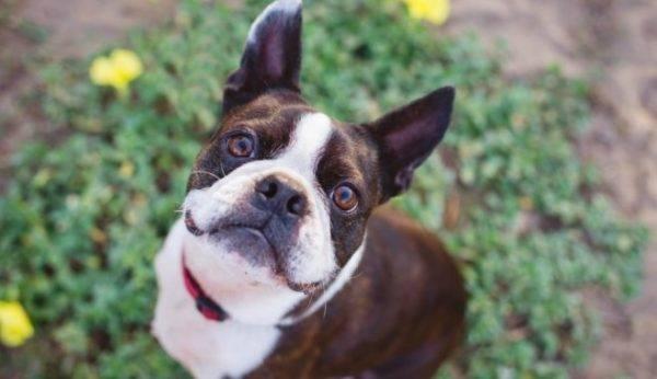 Клещевой энцефалит у собак читайте статью