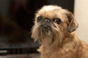 Догипедия - Всё о собаках - новости, статьи, фотографии