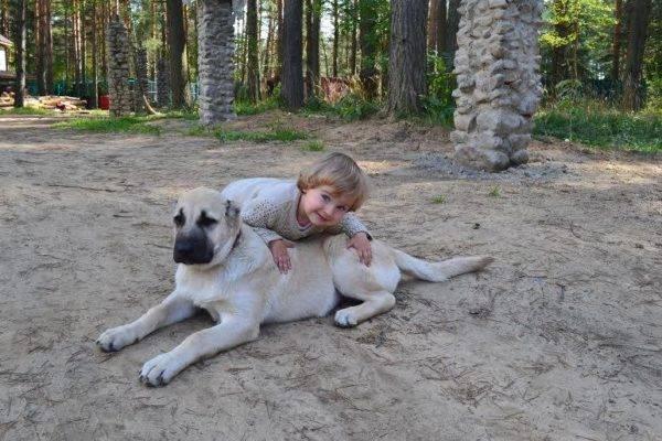 Гампра (Армянского волкодава) с ребенком