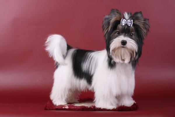 Сухой корм Royal Canin British Shorthair Adult для