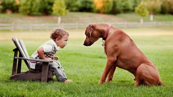 Родезийский риджбек с ребенком