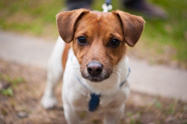 Норные породы собак читайте статью