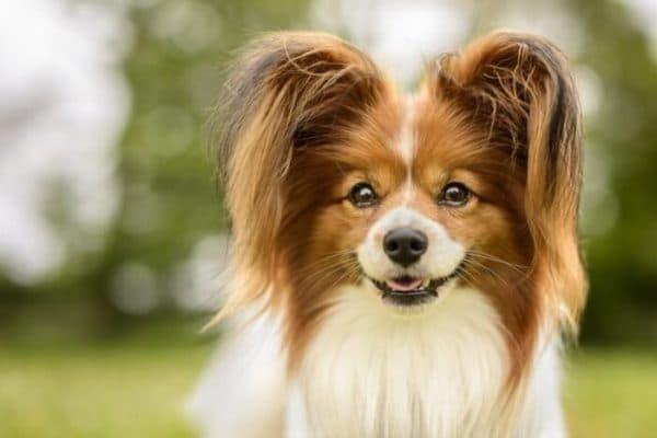 Английские клички для собак