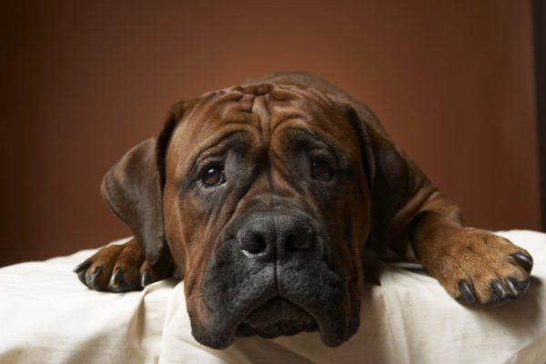 Болезни ЖКТ у собак читайте статью