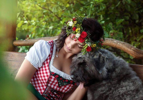 Фландрский бувье с девушкой