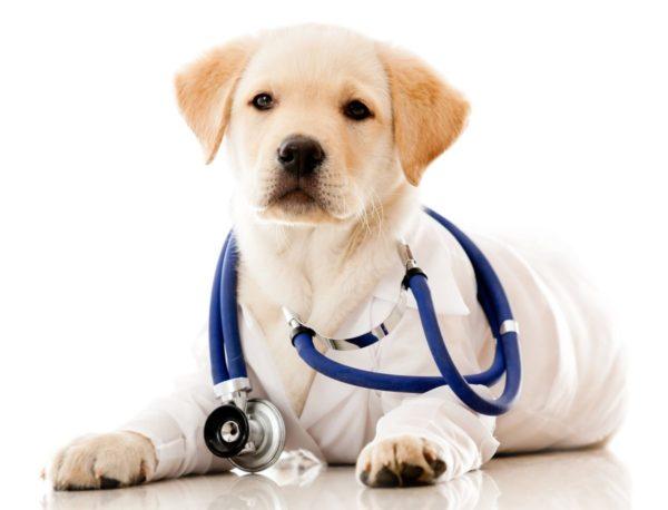 Гипоаллергенные собаки читайте статью