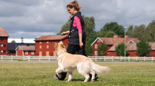 Как научить собаку команде рядом