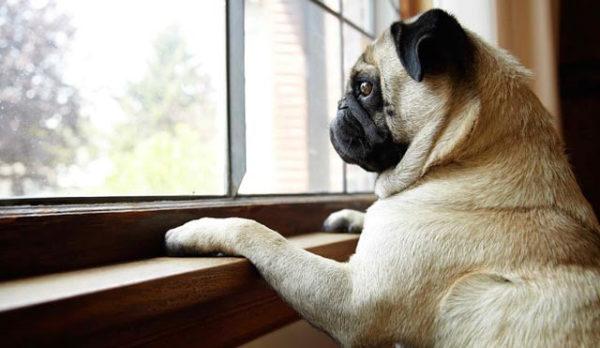 Как приучить собаку оставаться дома