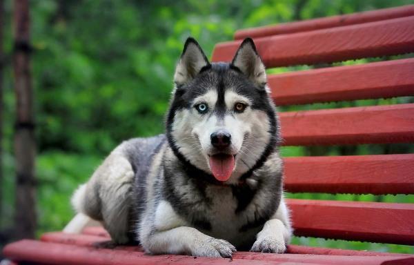 Клички собак на букву В читайте статью