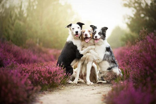 Клички собак на букву В