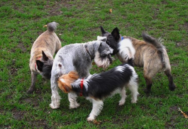 Почему собаки нюхают друг друга под хвостом читайте статью