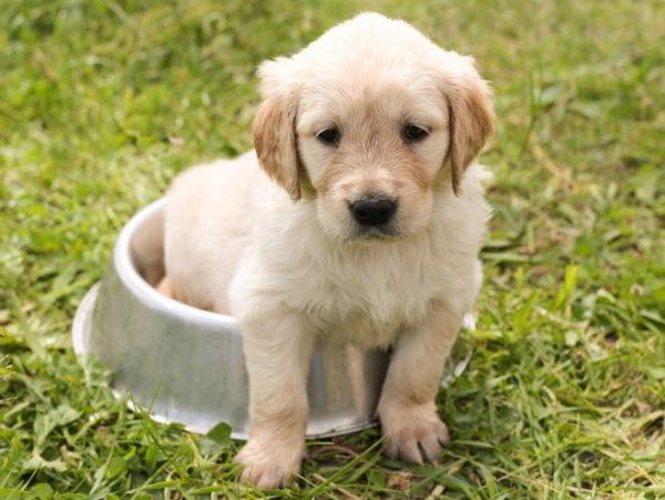 Понос у щенка читайте статью