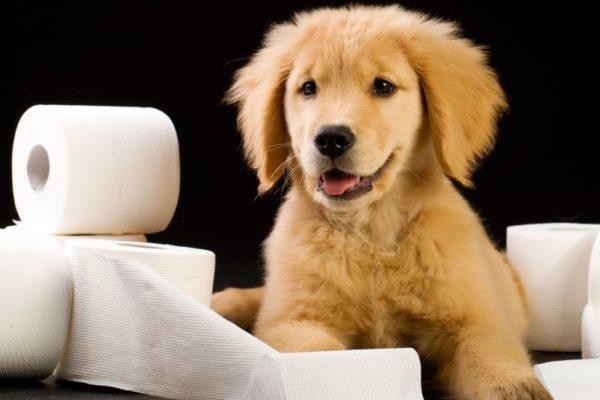 Понос у щенка