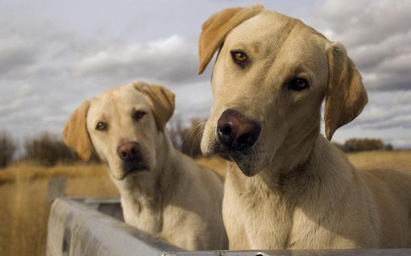 Сложные (двойные) клички для собак читайте статью