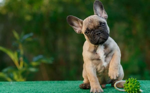 Сложные (двойные) клички для собак