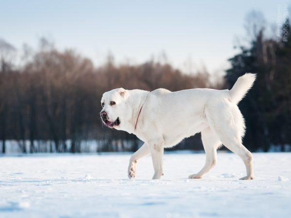 Сложные клички для собак