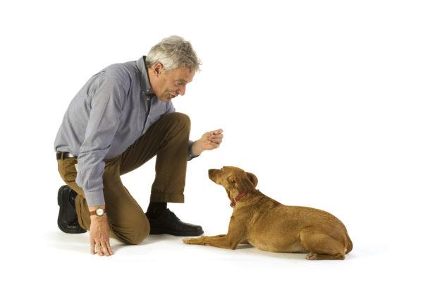 Как отучить собаку метить читайте статью