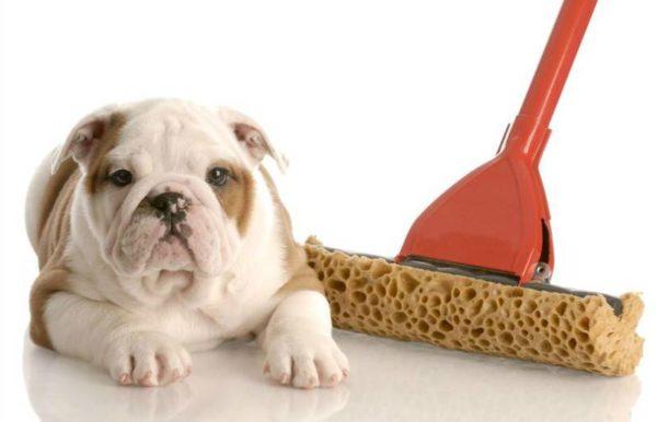Как отучить собаку метить. Причины и методы борьбы