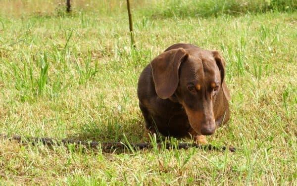 Как отучить собаку подбирать с пола или земли. Метод отвлечения.