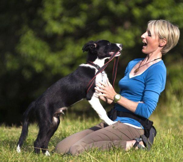 Как отучить собаку прыгать на людей. Эффективные методы