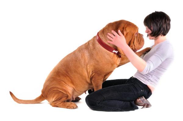 Как отучить взрослую собаку прыгать на людей