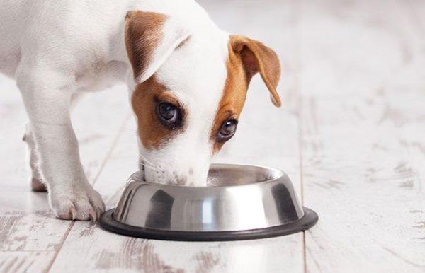 Чем кормить щенка при поносе правильно