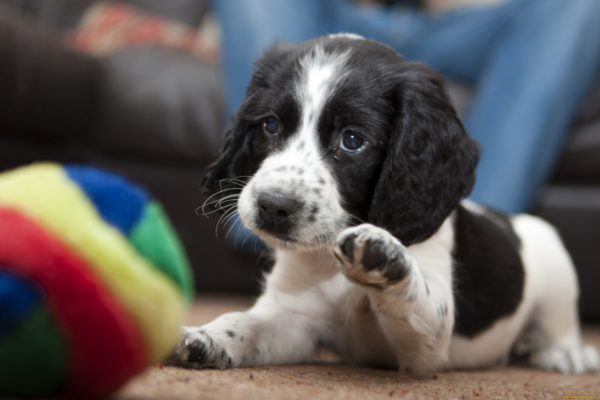 Читайте статью почему собака грызет когти